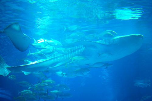 海遊館20110501.jpg