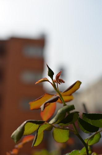 ナエマ20111012.jpg