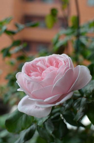 ナエマ20111103.jpg