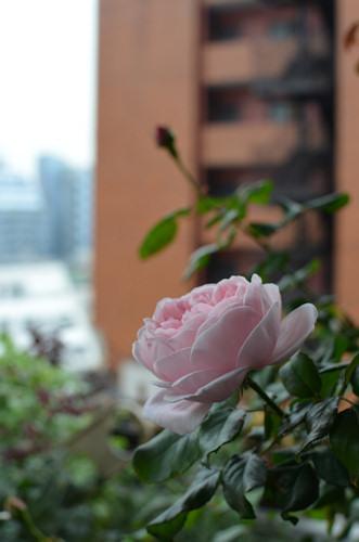 ナエマ20111103_03.jpg