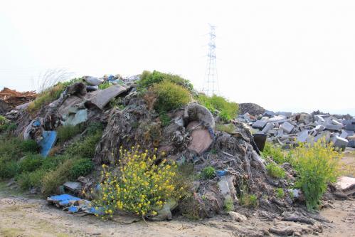 1日目、海岸近くの瓦礫の山
