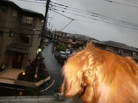 すごい雨でしゅ