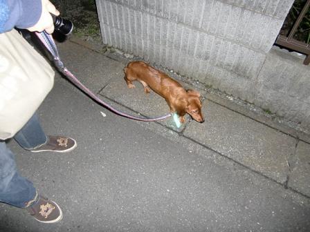 お散歩しに行かされたでしゅ