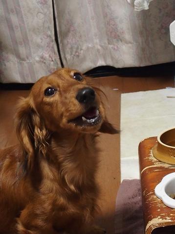 好きな時に食べるでちゅ!