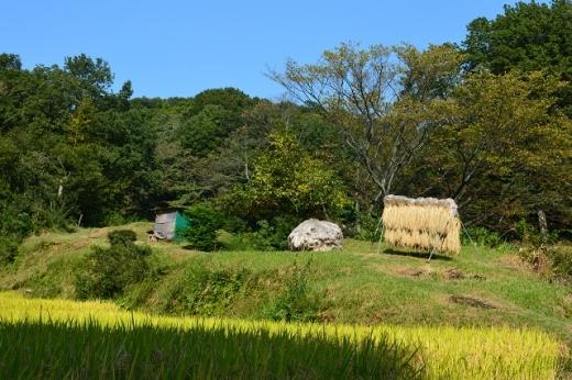 五反田谷戸の風景