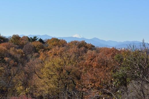 桜ヶ丘公園から見た富士山