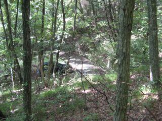 城山奥の雑木林1