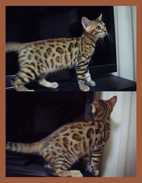 サクラ子猫Kitten.2