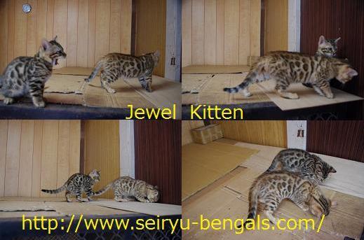 Jewel3.jpg