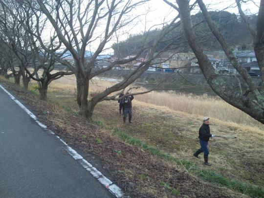 20130217_桜の枝切り_004