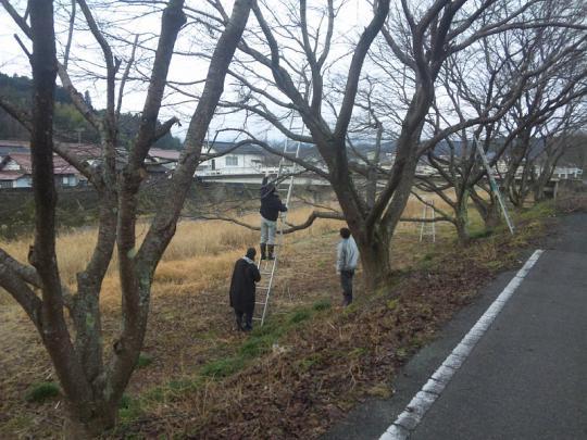 20130217_桜の枝切り_006