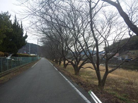 20130217_桜の枝切り_007