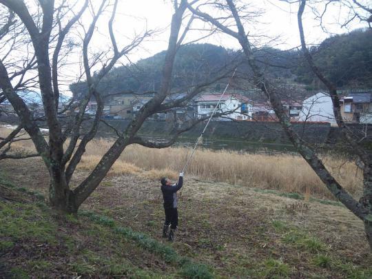 20130217_桜の枝切り_001
