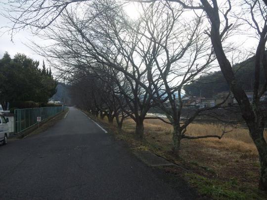 20130217_桜の枝切り_002