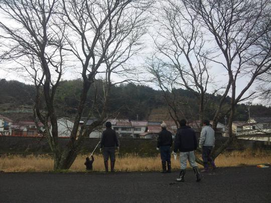20130217_桜の枝切り_003