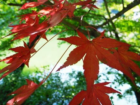 2012-09-13 鎌北湖 004