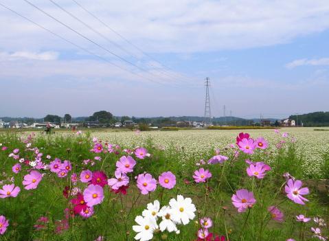 2012-10-17 そば畑 053