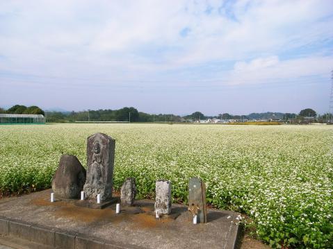 2012-10-17 そば畑 027