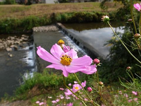 2012-10-31 ウィークデーハイキング 入間川沿いを歩く 006