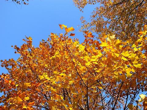2012-11-21 川越水上公園 004