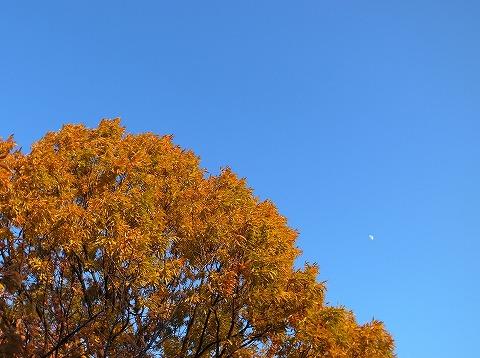 2012-11-21 川越水上公園 017