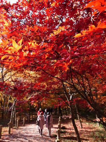 2012-12-05 平林寺 118