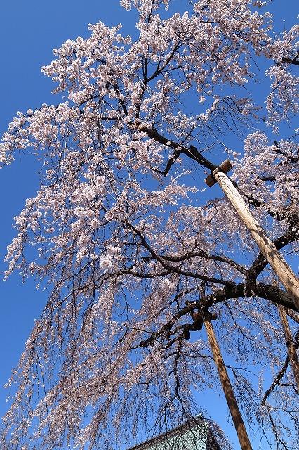 2013-03-21 喜多院 001