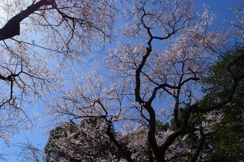 2013-03-21 喜多院 011