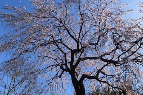 2013-03-21 西光寺 005