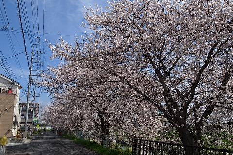 2013-03-28 小江戸川越ハイキング 033