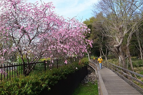 2013-03-28 小江戸川越ハイキング 023