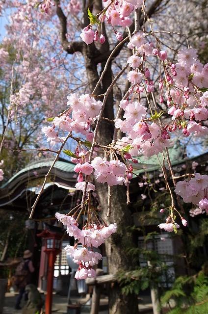 2013-03-28 小江戸川越ハイキング 010