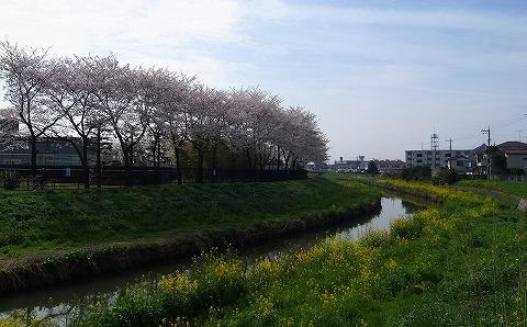 2013-03-28 小江戸川越ハイキング 027