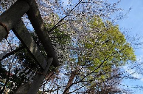 2013-03-28 小江戸川越ハイキング 019