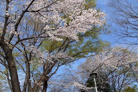 2013-03-28 小江戸川越ハイキング 088