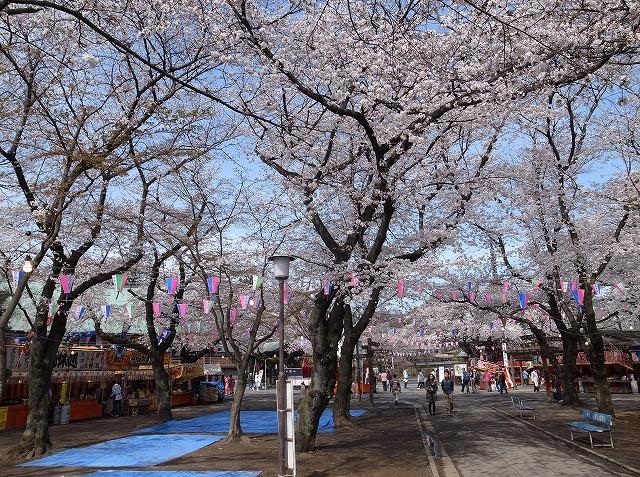 2013-03-28 小江戸川越ハイキング 059