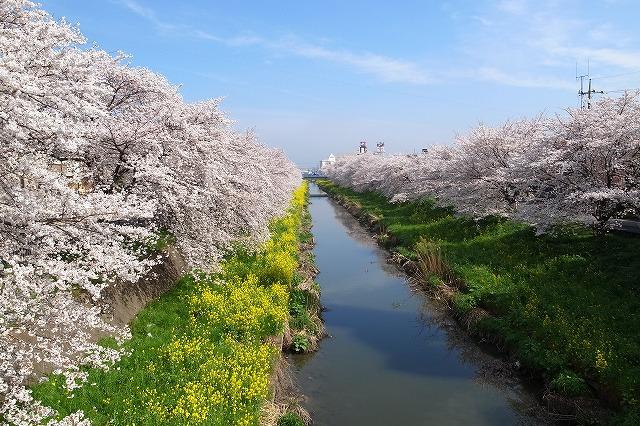 2013-03-28 小江戸川越ハイキング 047