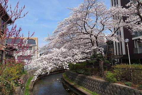 2013-03-28 小江戸川越ハイキング 137