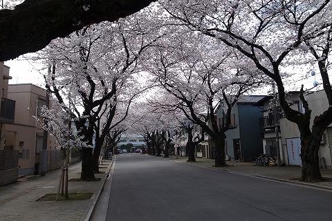 2013-03-28 小江戸川越ハイキング 140