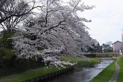 2013-03-28 小江戸川越ハイキング 132