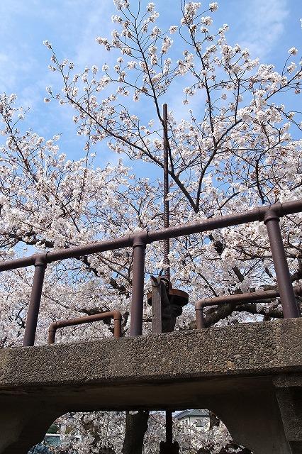 2013-03-28 小江戸川越ハイキング 127