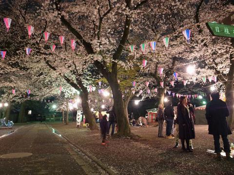 2013-03-30 喜多院 夜桜 007