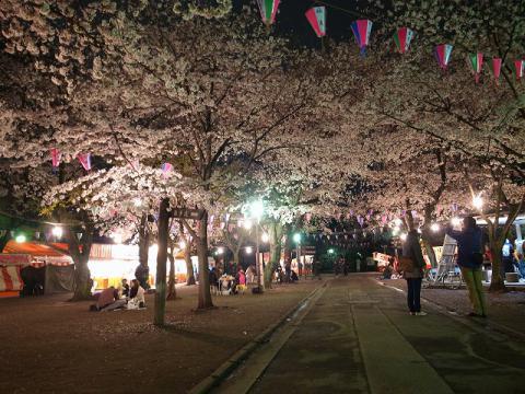 2013-03-30 喜多院 夜桜 002