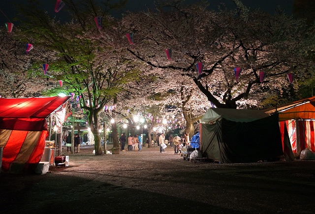 2013-03-30 喜多院 夜桜 013