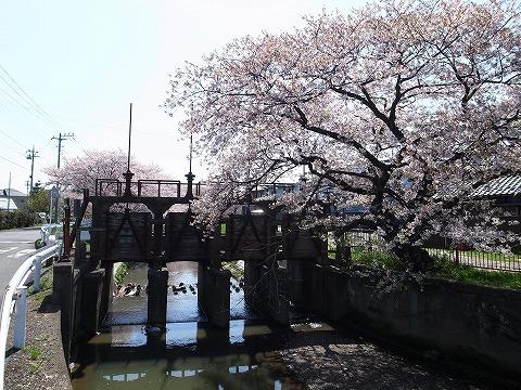 2013-04-04 新河岸川 001