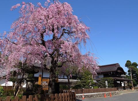 2013-04-04 本丸御殿 007