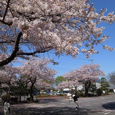 2013-04-04 本丸御殿 008