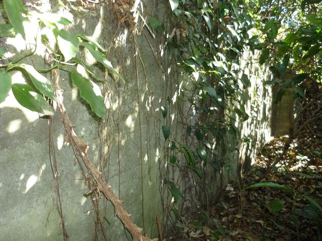 地下式遺構の壁