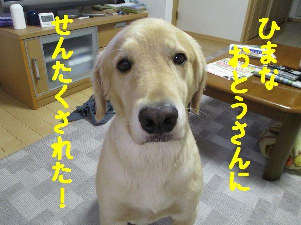 2014-9-21-ハチ-004