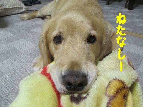 2014-9-30-ハチ-005